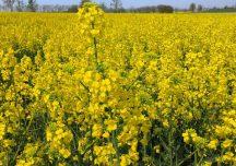 Ruszyła wypłata zaliczek dopłat za 2019 rok: 418 mln zł na kontach rolników