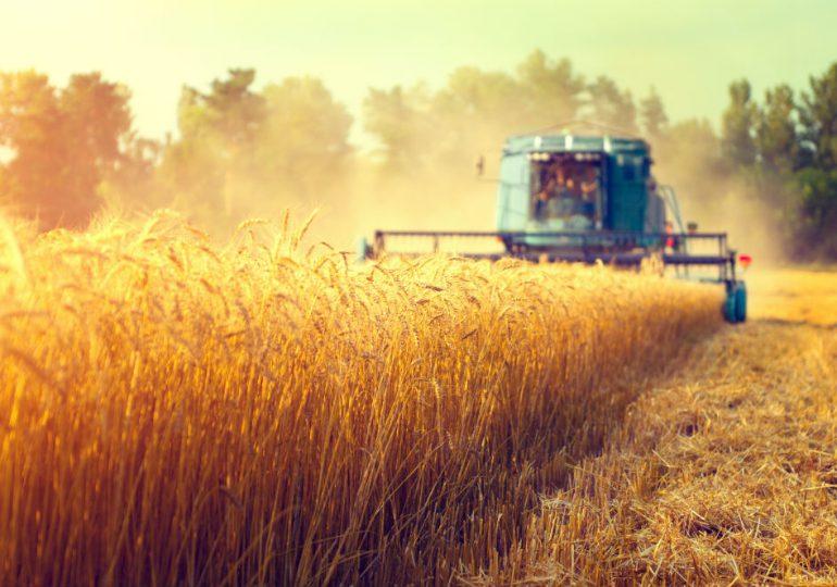 Na kontach rolników 4,5 mld zł zaliczek dopłat za 2019 rok