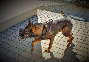Lubaczów: Pies wytropił na mokradłach migrantów