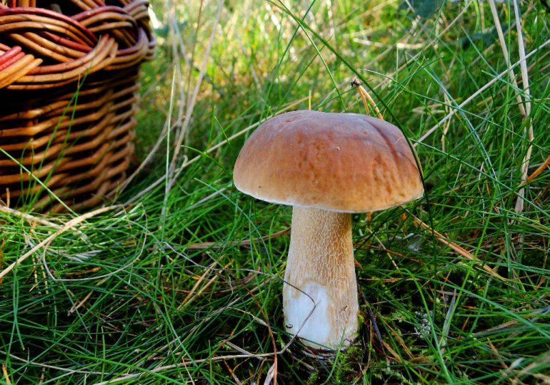 W lasach już można spotkać pierwsze grzyby