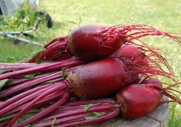Burak – najzdrowsze warzywo na świecie, które wyleczy niemal wszystko!