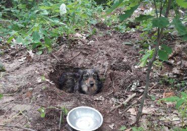 Kolbuszowa: Ktoś zakopał w lesie żywego psa