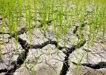 Już w przyszłym tygodniu nowy nabór: Inwestycje odtwarzające potencjał produkcji rolnej