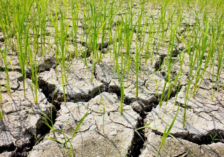 Pomoc suszowa: planowany termin rozpoczęcia naboru wniosków 3 października