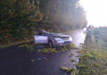 Nisko: Drzewo spadło na pojazd, nie żyje kierowca