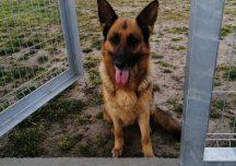 Rzeszów: Policjant zaopiekował się błąkającym psem