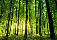 ARiMR: Posadź własny las i weź pieniądze – nabór wniosków dobiega końca