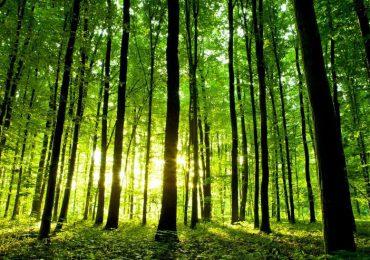 ARiMR: Posadź własny las i weź pieniądze - nabór wniosków dobiega końca