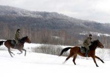 Ustrzyki Dolne: Patrole konne Straży Granicznej niezawodne na granicy