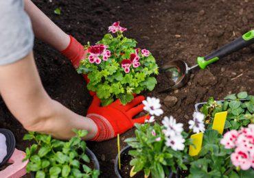 Porady: Maj w ogrodzie. Jakie kwiaty i warzywa siejemy?