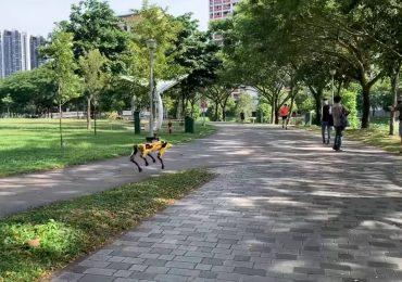 Technologia: Roboty chodzą po parku i pilnują odległości między ludźmi. Psy-roboty w Singapurze.