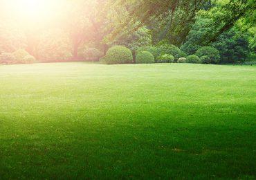 Porady: Pielęgnacja trawnika: co zrobić, aby nasz trawnik był piękny?