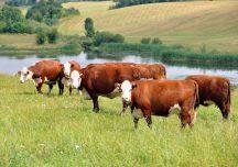 Rzeszów: Fundacja Carrefour wspiera polskie rolnictwo ekologiczne