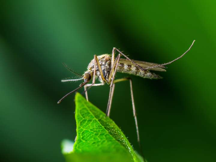Rzeszów: Opryski na kleszcze i komary w parkach, na placach zabaw i zieleńcach