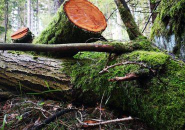 Ropczyce: Tragiczny wypadek podczas prac leśnych. Nie żyje 56 letni mężczyzna