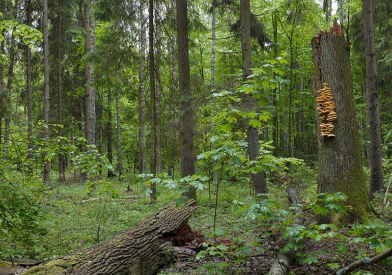 Jarosław: Wycinka drzew w Pantalowicach – sprawą zajęła się prokuratura