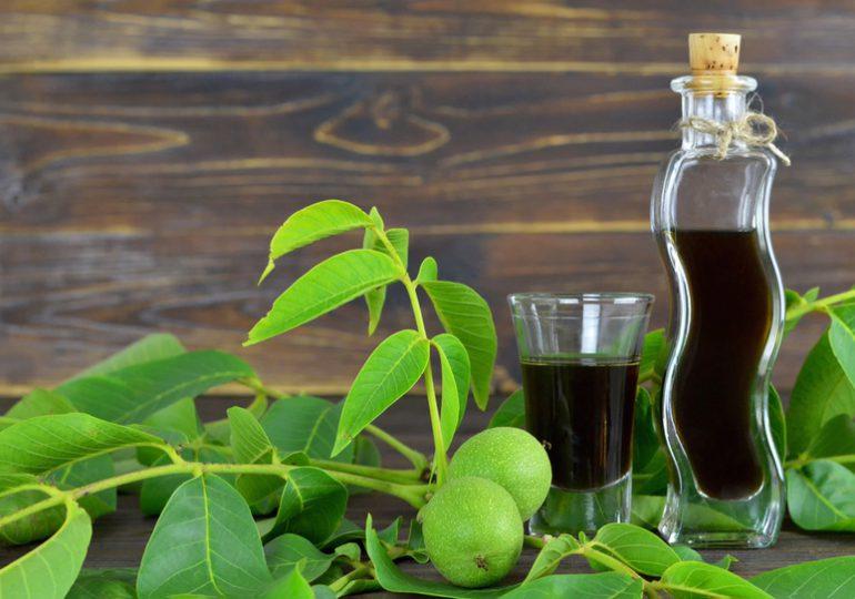 Porady: Orzechówka - lekarstwo z zielonych orzechów