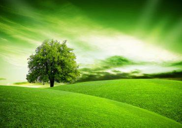 Dębica: Dotacja na edukację ekologiczną