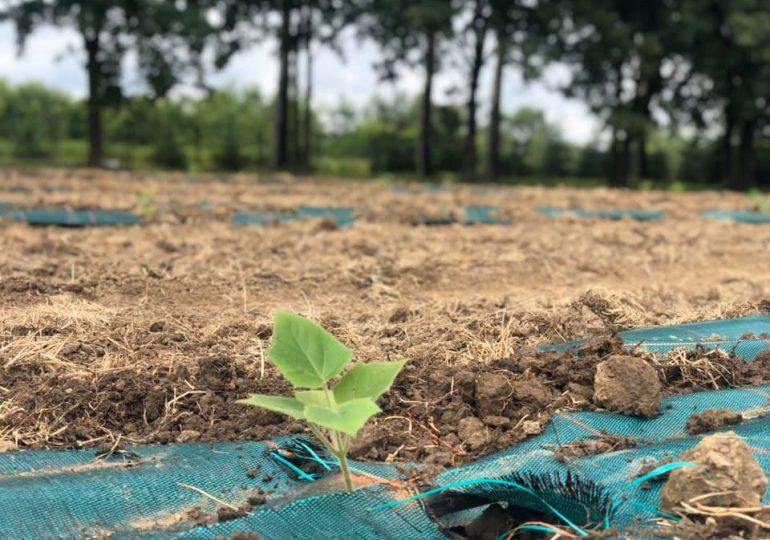 Dębica: Powstała pierwsza plantacja drzew tlenowych