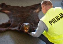 Jarosław: Chciał sprzedać skórę z niedźwiedzia. Teraz za to odpowie