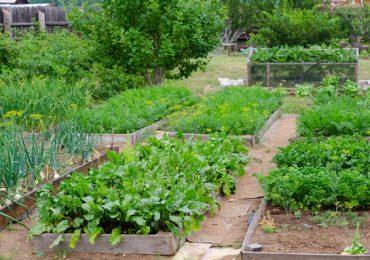 Porady: Lipiec w ogródku warzywnym. Co możemy siać?