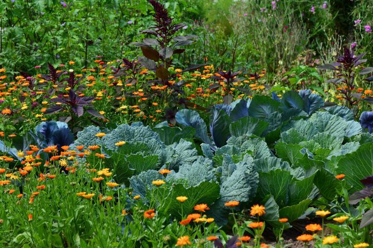 Porady: Sierpień w ogrodzie i na działce