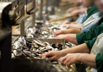 """ARiMR: Dzisiaj ostatni dzień składania wniosków w zakresie działania 5.4 """"Przetwarzanie produktów rybołówstwa i akwakultury"""""""