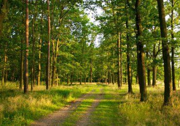 Prawo: Zaostrzenie kar za wyrzucanie śmieci do lasu