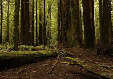 Podkarpacie: W leśnych ostępach