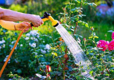Porady: Pielęgnacja ogrodu podczas upałów