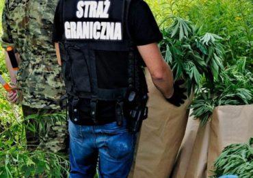 Jarosław: Trzy miesiące aresztu za narkotyki