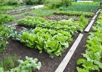 Porady: Rośliny, które możemy wysiewać w sierpniu