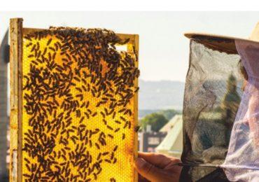 Rzeszów: Degustacja i kiermasz produktów pszczelarskich