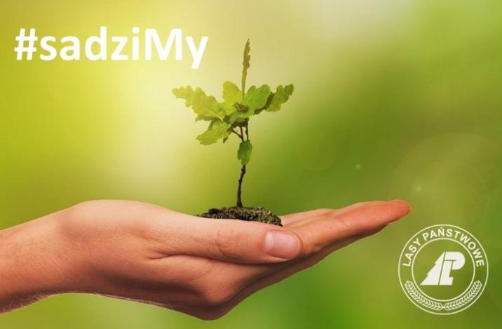 Polska: Lasy Państwowe chcą rozdać milion sadzonek drzew