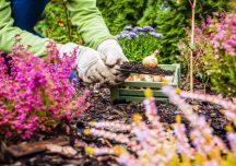 Porady: Wrzesień w ogrodzie. Jakie prace należy wykonać