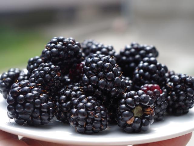 Porady: Sok z jeżyn - bogaty w korzyści zdrowotne