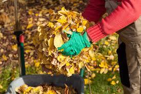 Krosno: Jesienne porządki w ogrodzie. Miasto odbierze zielone odpady za darmo