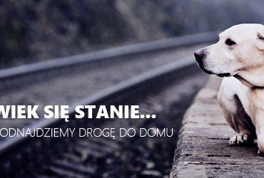 Polska: Safe-animal. Pierwsza w kraju aplikacja dla właścicieli zagubionych zwierząt