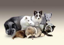 Prawo: Ustawa o ochronie zwierząt, Czy Prezydent ją podpisze?