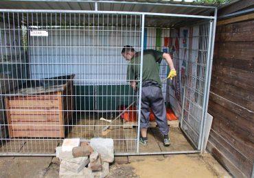 Dębica: Służba Więzienna pomaga porzuconym psom