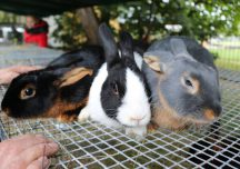 Rzeszów: Tłumy ludzi na XV Jesiennej Giełdzie Ogrodniczej. Wystawa królików jedną z najważniejszych atrakcji.