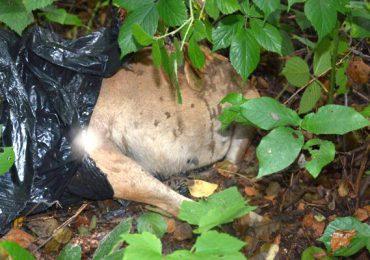 Tarnobrzeg: 52-latek zatłukł psa, bo był mu nieposłuszny