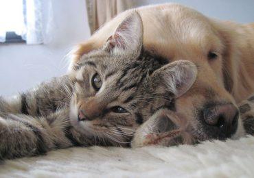 Krosno: Darmowe czipowanie psów, sterylizacja psów i kotów za pół ceny