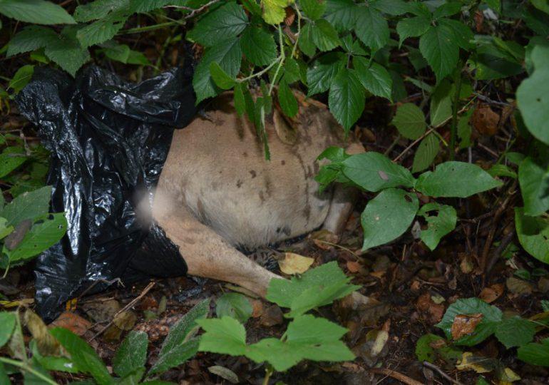 Tarnobrzeg:  52- latek zabił psa ze szczególnym okrucieństwem.