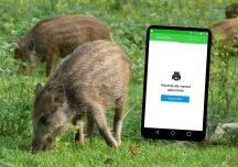 Rolnictwo: Aplikacja Zgłoś Dzika w obronie dziko żyjących zwierząt