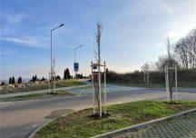 Jasło: Kilkadziesiąt nowych drzew w mieście