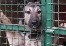 Rzeszów: Schronisko dla zwierząt apeluje o adopcję zwierząt. W placówce brakuje pracowników.