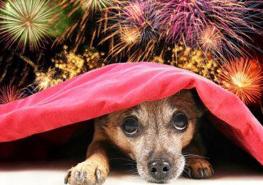 Porady: Jak przygotować zwierzęta na noc sylwestrową