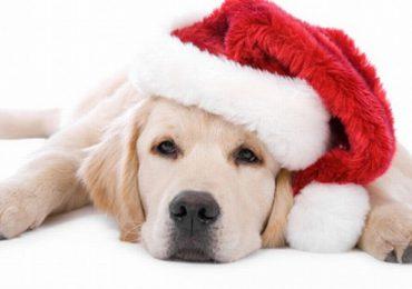Kolbuszowa: Świąteczna paka dla zwierzaka