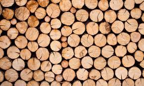 Biznes: W cenie drewno z podkarpackich lasów